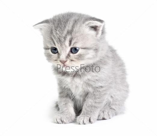 Little kitten sitting