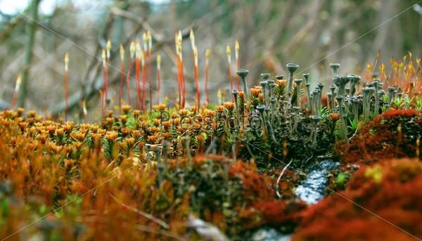 Яркий весенний мох