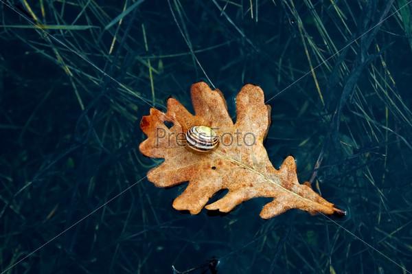 Лист дуба в воде