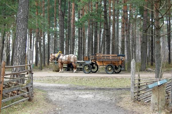 Лошадь с повозкой для катания