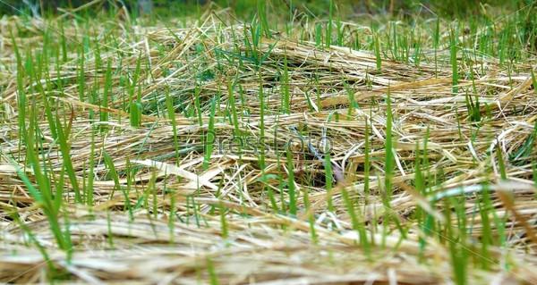 Старая и молодая трава