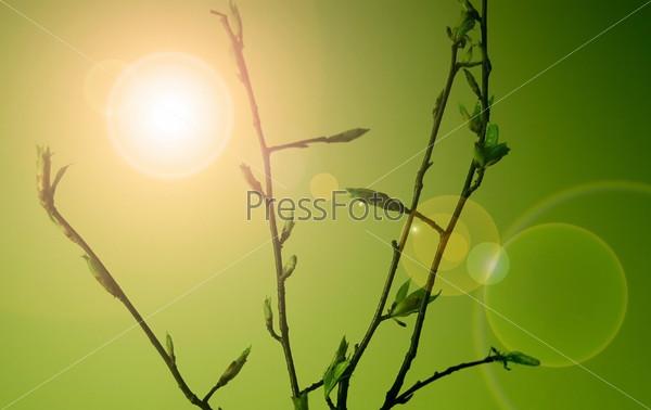 Молодые листочки на ветках