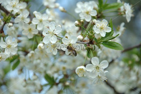 Медоносные цветки
