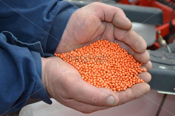 Семена сахарной свеклы в руках человека