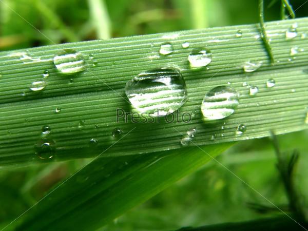 Капли дождя на листе - Drops on leaf