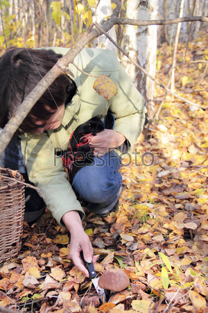 Woman cuts off boletus mushroom