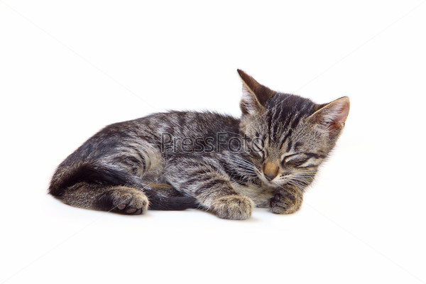 best cat odor remover