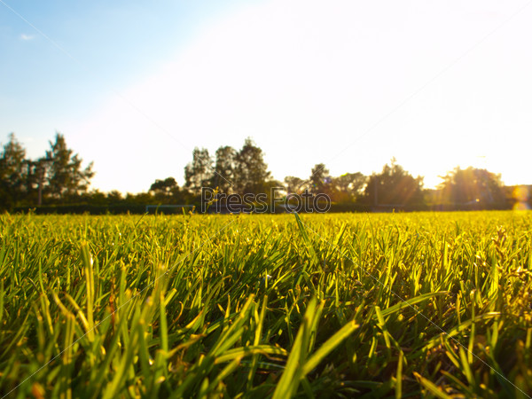 Трава на футбольном поле