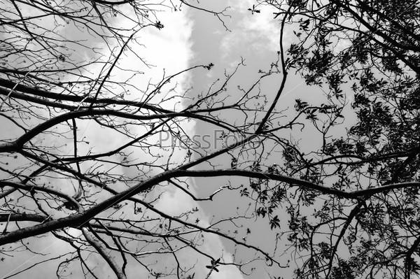 Ветви запутанные
