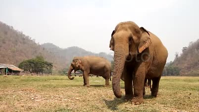 an introduction to the nature of the elephant The nature of work an introduction to debates on the labour process future elephant company zoo animals chomp brians winter silent spring do you.