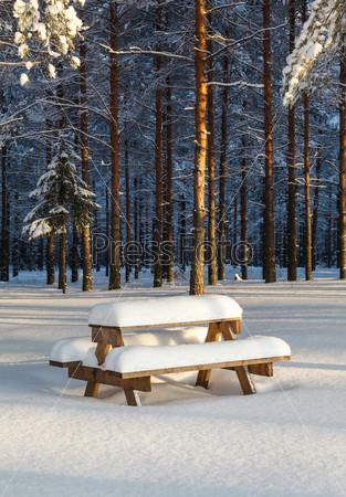 Фотография на тему Зимний сосновый лес