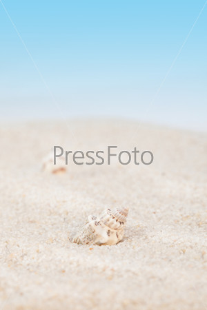 Фотография на тему Морская раковина на фоне синего неба