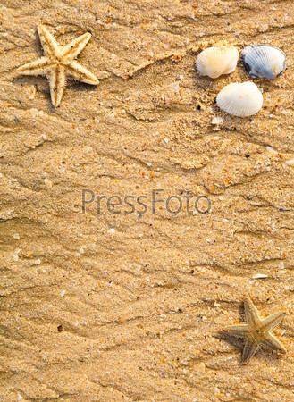 Фотография на тему Ракушки и морская звезда на песке