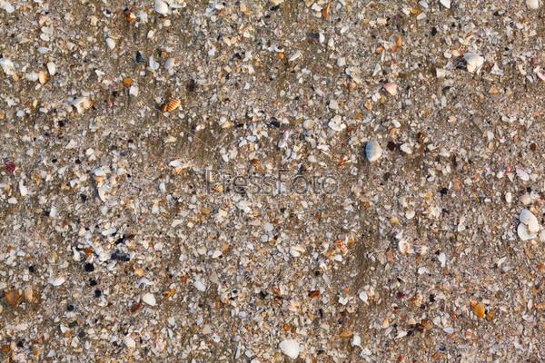 Ракушки и морская звезда на песке