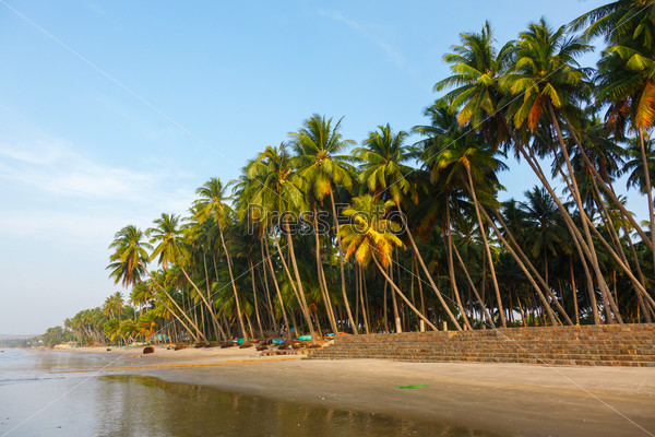 Фотография на тему Пляж, пальмовые деревья и небо