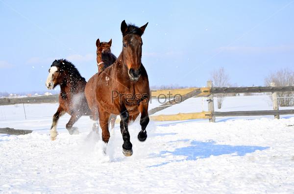 Фотография на тему Бегущие лошади