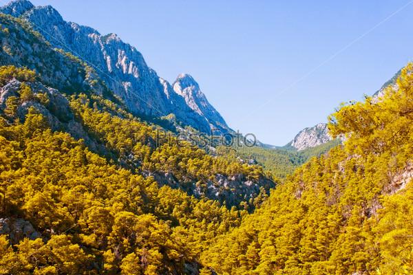Фотография на тему Горный лес
