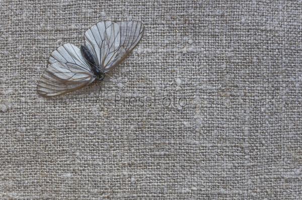 Абстрактный фон с бабочкой
