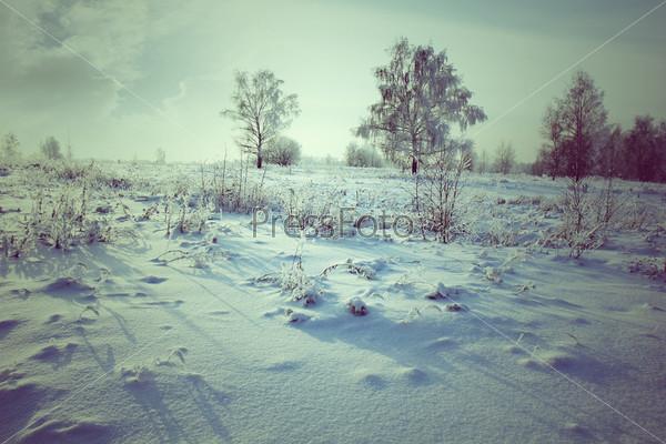 Фотография на тему Зимний парк в снегу
