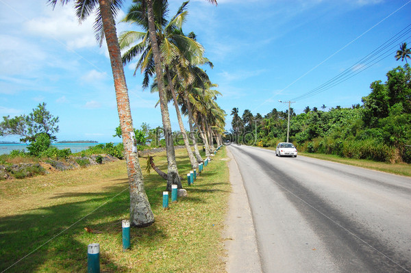 Белый автомобиль на дороге с пальмами