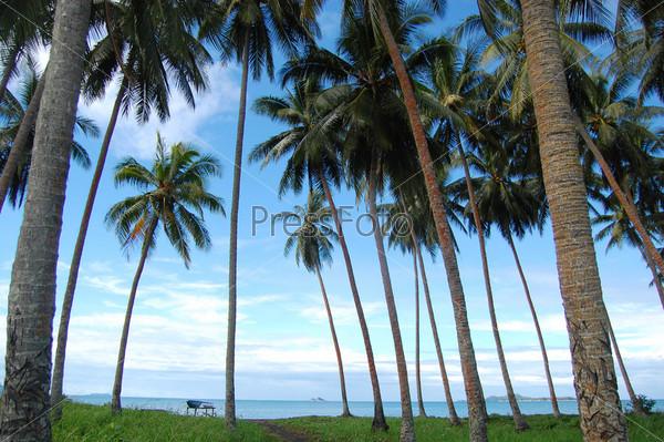Пальмы на морском побережье