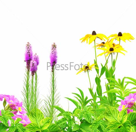 Фотография на тему Летние цветы