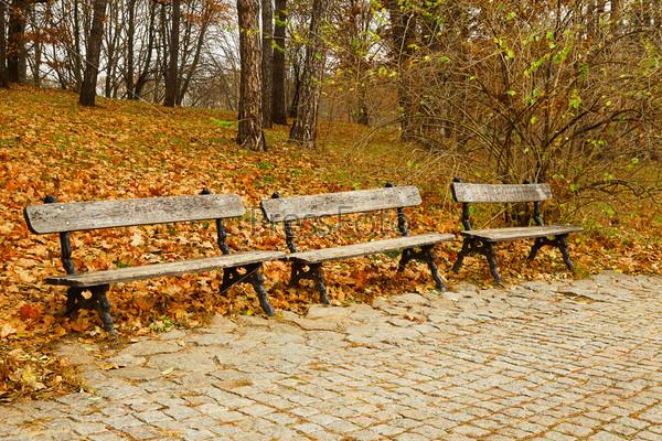 Деревянные скамейки в осеннем парке