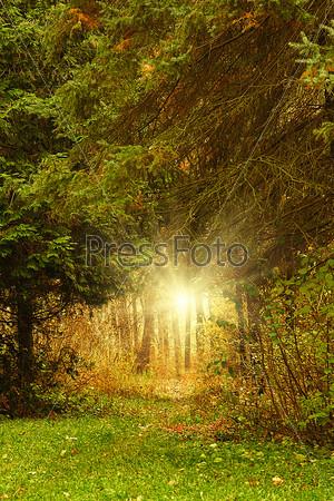Деревья растут в лесу осенью