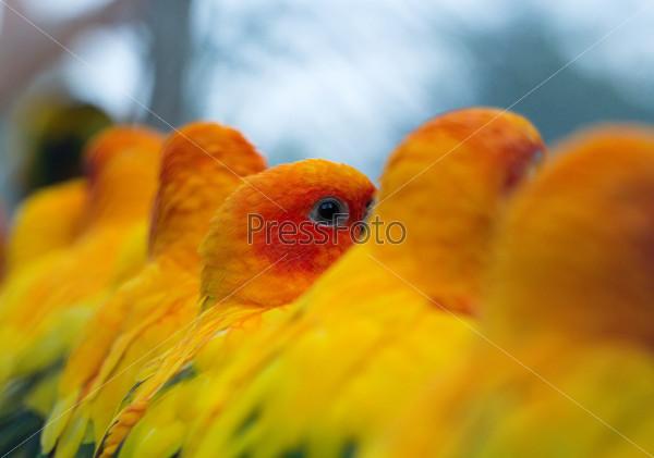 Попугаи в зоопарке