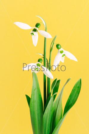 Фотография на тему Красивые белые цветы