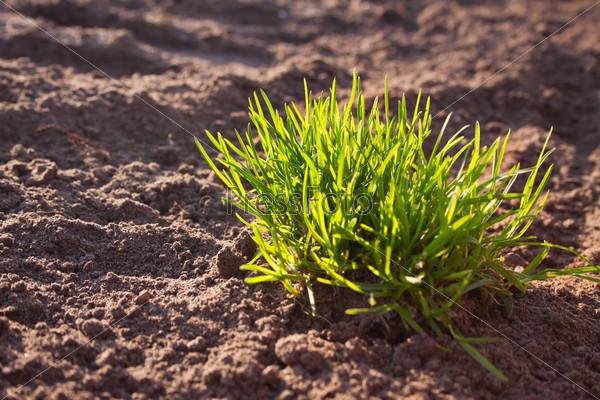 Трава на рыхлой почве
