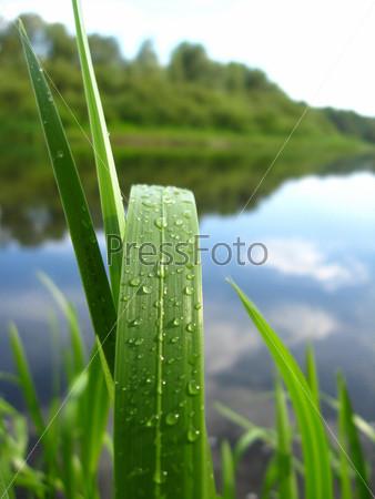 Фотография на тему Росинки на зеленой траве у реки