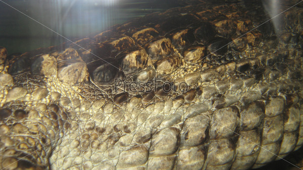 Крокодиловая кожа