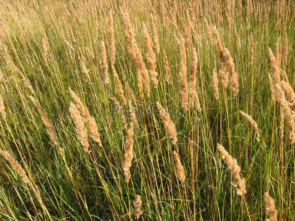 Фотография на тему Заросли высокой зеленой травы