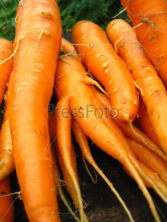 Куча моркови