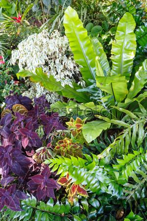 Фотография на тему Зеленая растительность