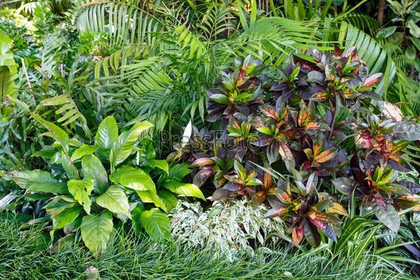 Зеленая растительность