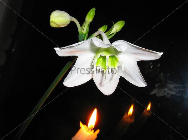 Цветок лилии и свечи на черном фоне
