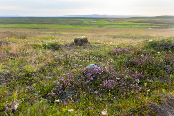 Природа Исландии летом