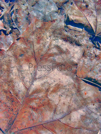Волшебный гранжевый фон из кленового листа
