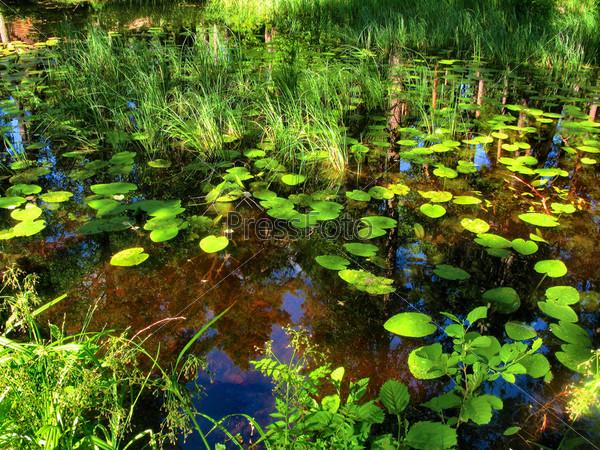 Фотография на тему Болото в лесу с отражением