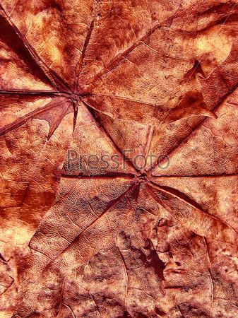 Фотография на тему Фантастический гранжевый фон с кленовыми листьями