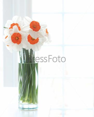 Фотография на тему Нарциссы