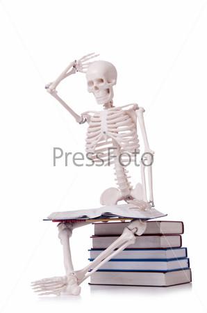 Скелет читает книги на белом фоне