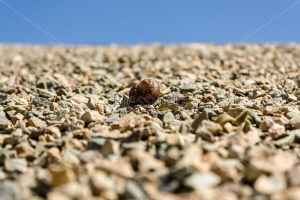 Фотография на тему Улитка на камнях