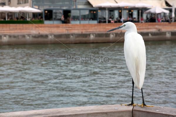 Малая белая цапля сидит на фоне городской набережной