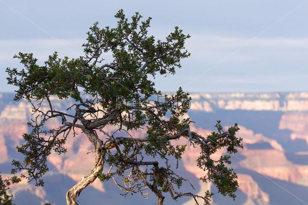 Фотография на тему Национальный парк Гранд-Каньон