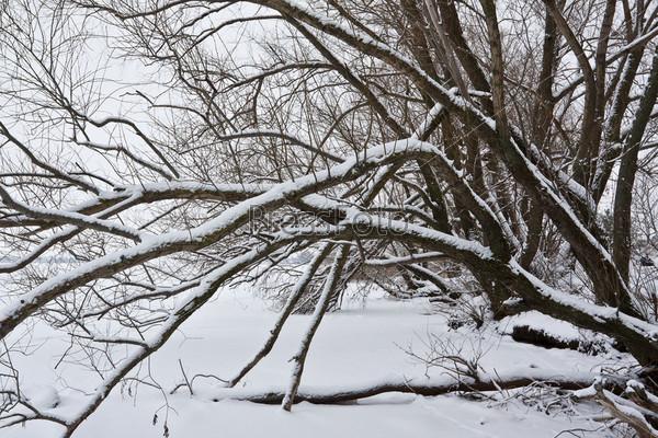 Фотография на тему Деревья на берегу