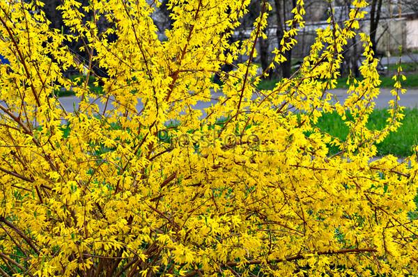 Фотография на тему Весна в разгаре