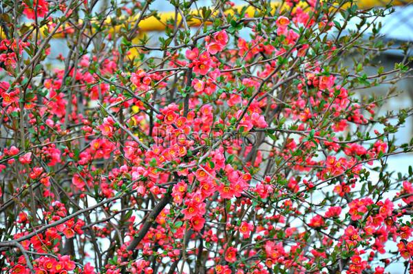 Фотография на тему Пришла весна